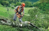 Chainsaws5.jpg