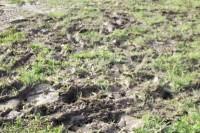 Mud1.jpg