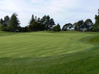 One of the new greens still in grow in stage. Pakuranga Country Club
