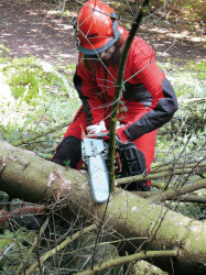 651 chainsaw (action)e