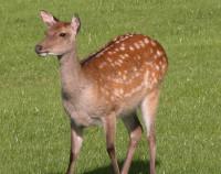 Deer #1.jpg
