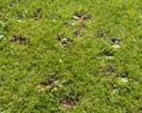 septrugby-diary-weeds.jpg