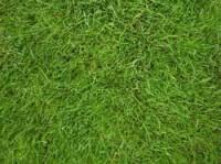 pow-cheltenahm-grass.jpg