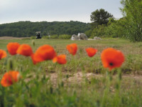 menorca-son_parc_poppies.jpg