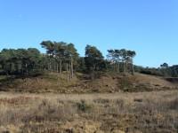 Parkstone Heathland