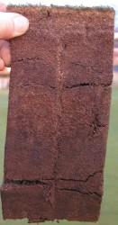 Healthy soil Turf Landing page.jpg