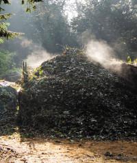 Compost1.jpg
