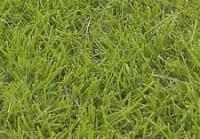 Zoysia-grasses-copy-2.jpg
