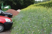 FulfordHeath Wildflowers1