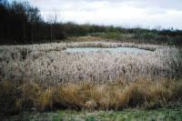 paul-A14-balance-pond---rus.jpg