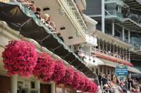 york flowers 3