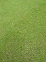 TTSgrass.jpg