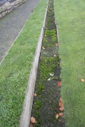 bowring-park-ditches-moss.jpg