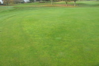 004 Moss presence on LHS raised section of green