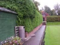hedges-jpg.jpg
