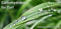 Wet leaf2.jpg