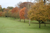trees on fairway