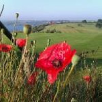 poppys at the back of the 17th green