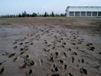floods-Jeff-Perris-STRI.jpg