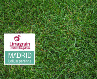 Madrid-new.jpg