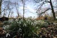 bowring and slimbridge feb 2012 287