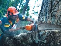 TreeFelling2