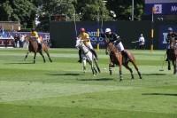 PP HorsesMain