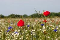 02 Wildflowers. Heartwood Forest. WTPL-Louise Neicho.jpg