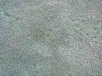 Frost Footprints2