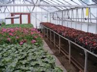 Hartpury-Plants.jpg