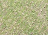 victoria-park-seed.jpg