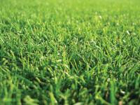 Grass-CloseUp2.jpg
