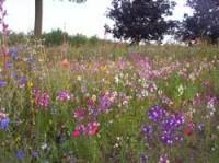 wild-flower-mix-4.jpg