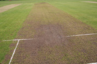cricket-diary-pitch.jpg