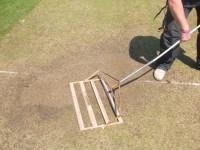Cricket Lute