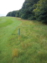 Buffer areas provide refuge to wildlife whilst adding definition to the course