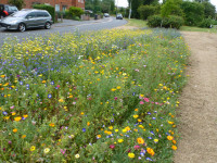 Contemporary annual planting on roadside a positive sign for the future