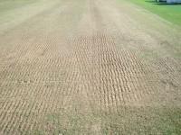 Cricket Grounds SepOct09 027.jpg