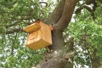 StIves BirdBox