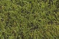 bermuda-grasses-copy-3.jpg