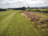 Heather regeneration along the boundary of our course