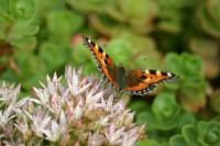 01 butterfly on enviromat.jpg