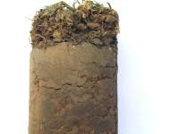 soil sample DMBC.jpg