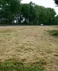 The effect of recent cut backs on green spaces grass maintenance in Leicestershire