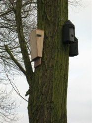 Bat Boxes on Tree.JPG