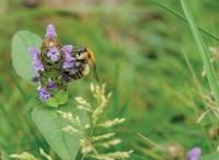 Bumblebee   TOP 2012 mr