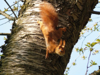 RedSquirrel3 Pixabay