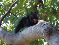 BlackSquirrel2 RGBStock