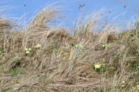 IMG primroses in bent small for PB