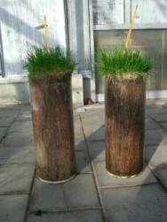 leyland-Roots.jpg